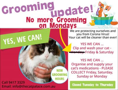 Cat Grooming And Cat Care In Sydney The Cat Palace